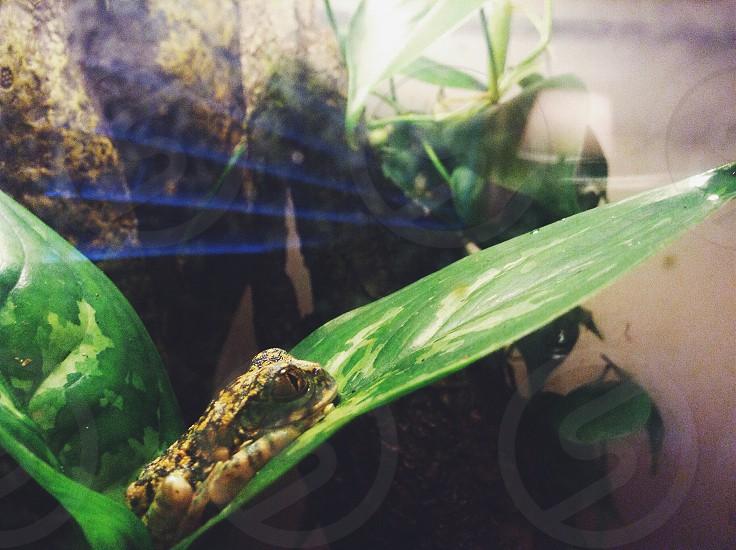 brown frog on green leaf photo