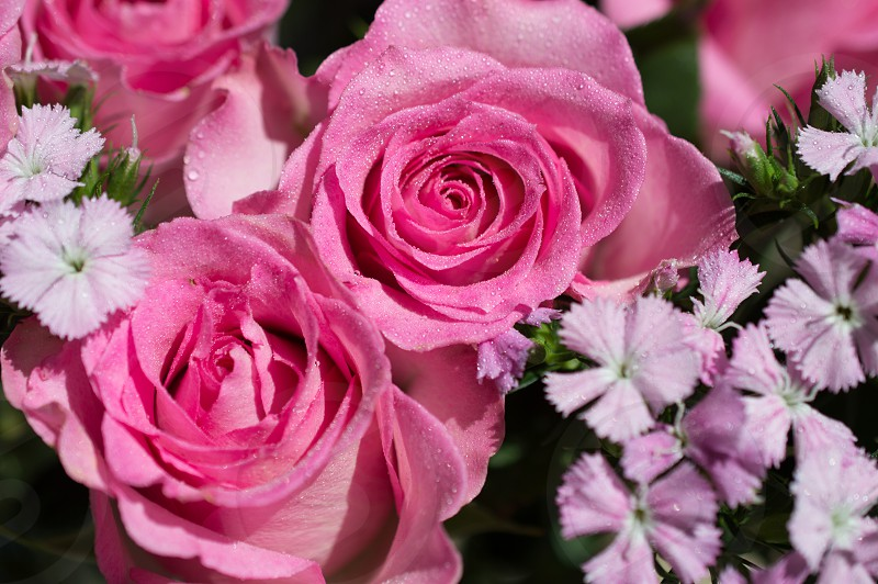 Mothers Day pink rose bouquet photo