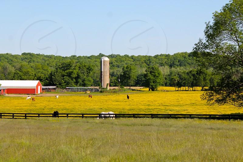 Kentucky horse farm. photo