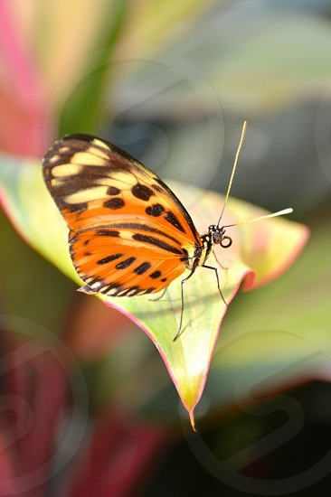 orange black and brown butterfly on yellow plant photo