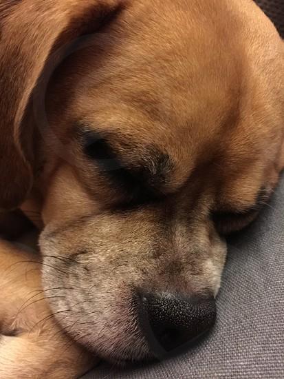man's best friend dog tired photo