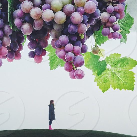 woman standing near the vineyard photo