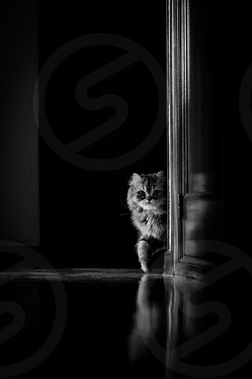 cat black and white hunting natural light expectant photo