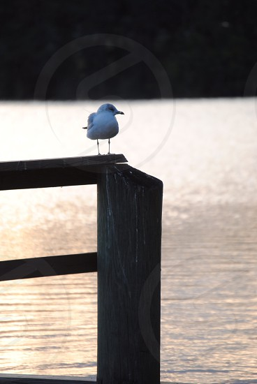 white and grey bird on top of wood apnel photo