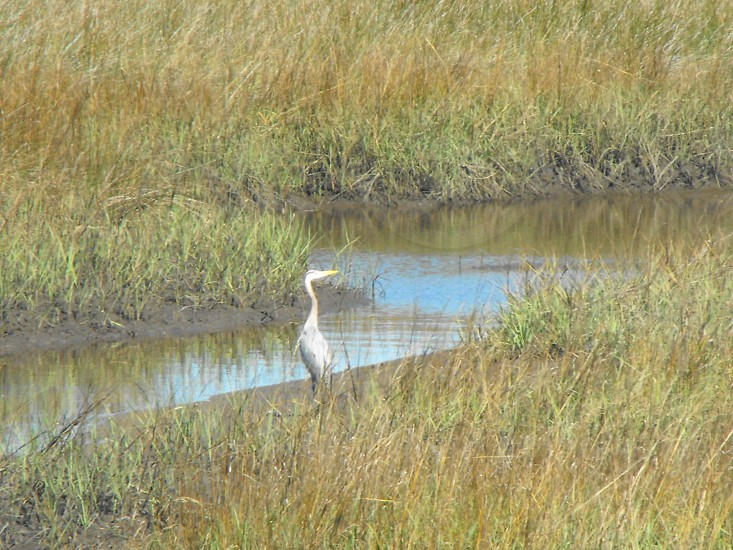 Bird at River photo