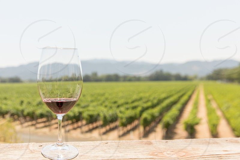 A glass of red wine in front of rows of grapevines in a vineyard photo