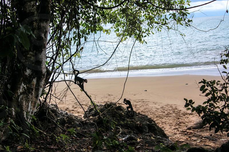 Tropical Beach monkeys free no worries photo