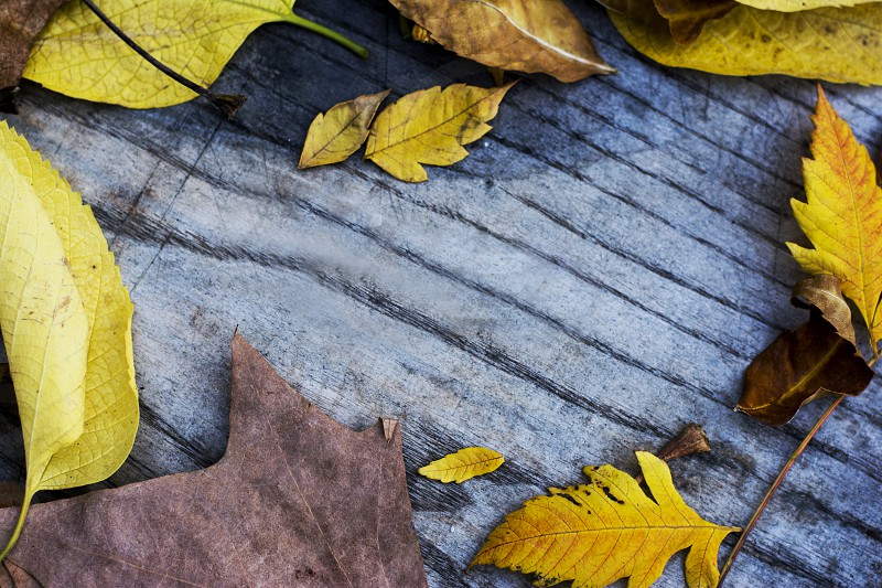 Wooden background with colorful autumn leaves laying around. Shot in Sombor Serbia. photo