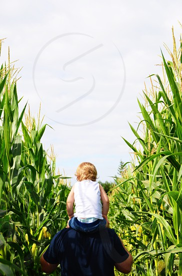 Little girl riding on fathers shoulders through cornfield  photo