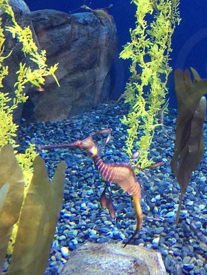 Atlanta aquarium  photo