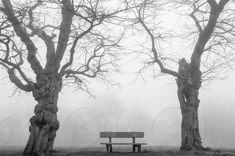 park benchfogtreesmistatmosphericblack and whiteemptypark photo