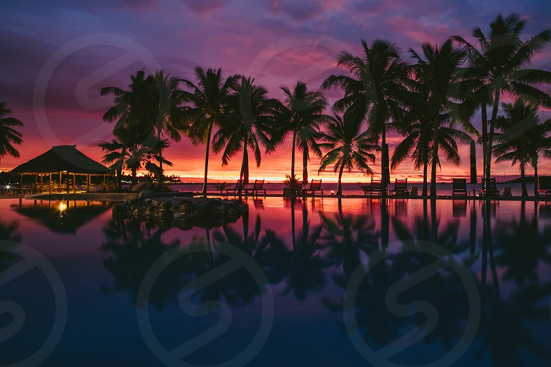 beach tropical palm tree holiday recreation travel resort beach ocean swimming pool pool reflection sunset silhouette  photo