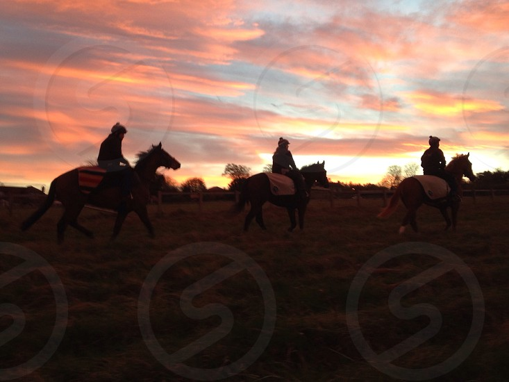 Racehorses in the paddock at Sunrise photo