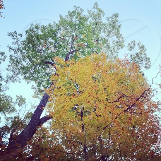 green and yellow tree low angle photo photo