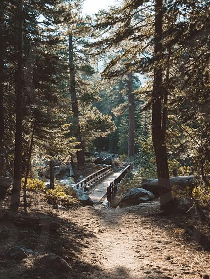 brown wooden bridge between green trees during daytime photo