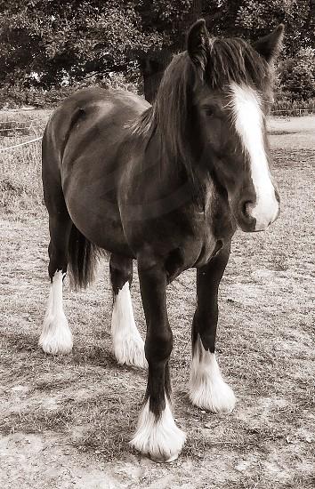 Cart horse photo