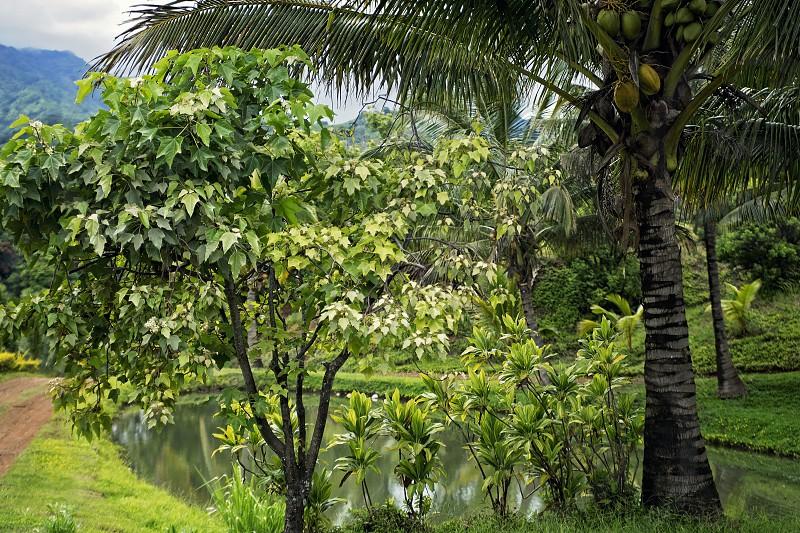 Green Kauai photo