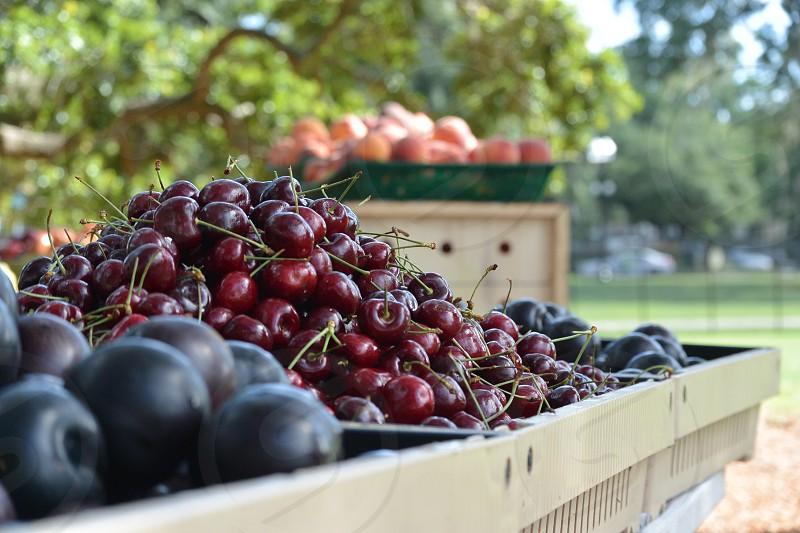 red cherries photo