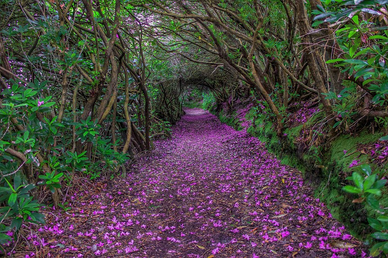 purple flowers scattered at brown pavement surrounded with trees photo