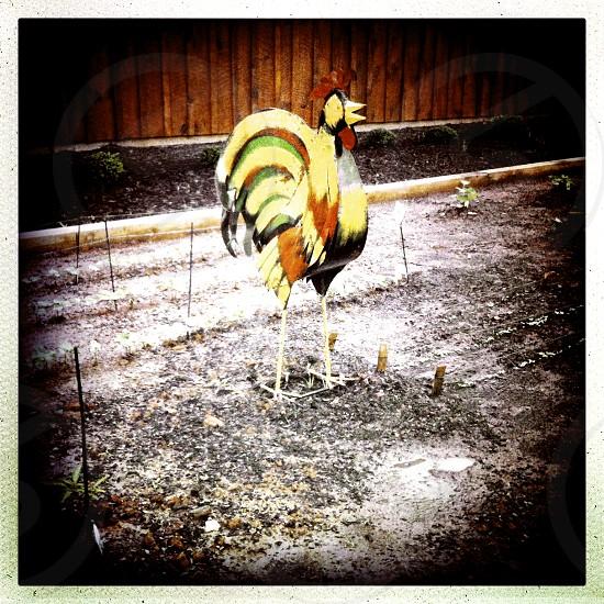 hen garden decoration photo