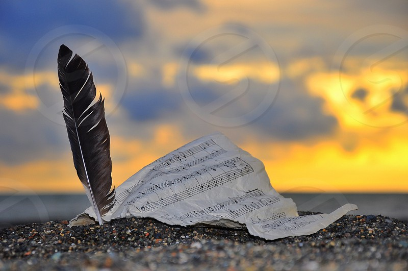black feather and music note photo
