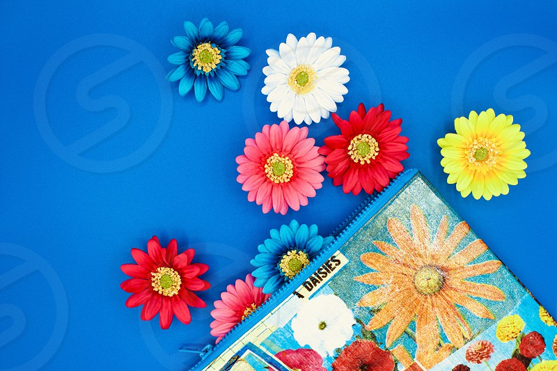 Flat lay of Gerbera daisies and a colorful floral-print zipper bag with blue trim on a bright blue background photo