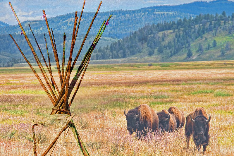 Native American tipi and American bisons photo