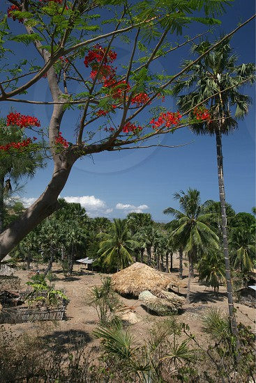 the landscape at the village of Lantam in the south of East Timor in southeastasia. photo
