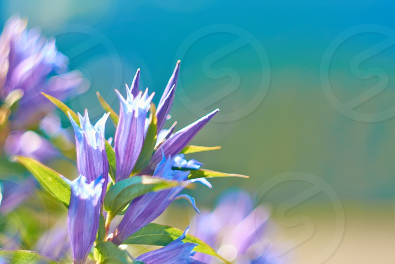 photography sunlight meadow green spring petal day flower horizontal leaf field bright head grass light summer wildflower springtime colored macro season small stem focus color group blue growth plant selective beauty outdoors backgrounds art space image nature freshness copy space photo
