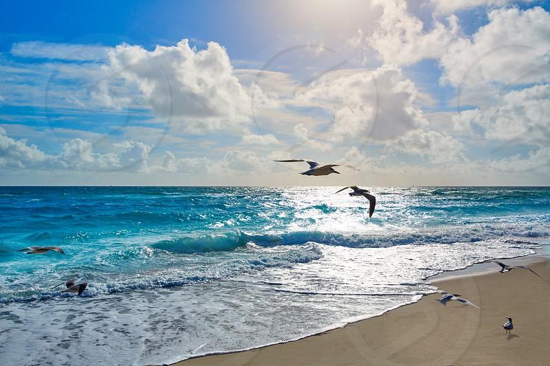 Singer Island beach seagulls at Palm Beach Florida in USA photo