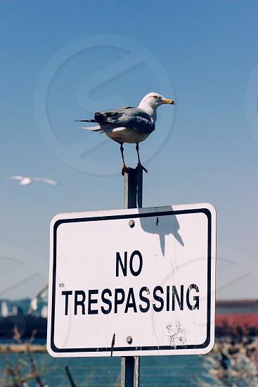 No Trespassing sign Ontario Canada photo