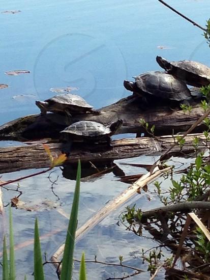 Turtle heaven... photo