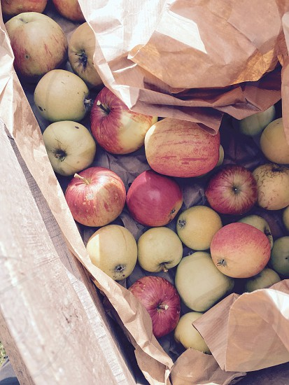 red apple fruits near brown paper photo
