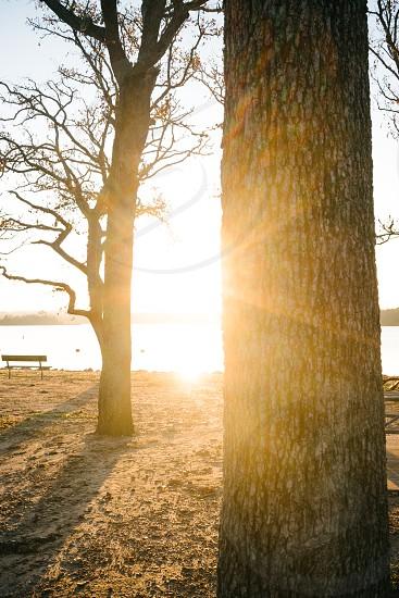 Sunlight through the trees. photo