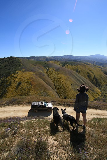 person with 2 black dogs on a hill top during day time photo