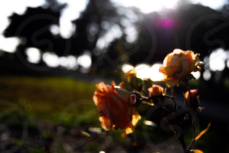 orange flower macro photography photo