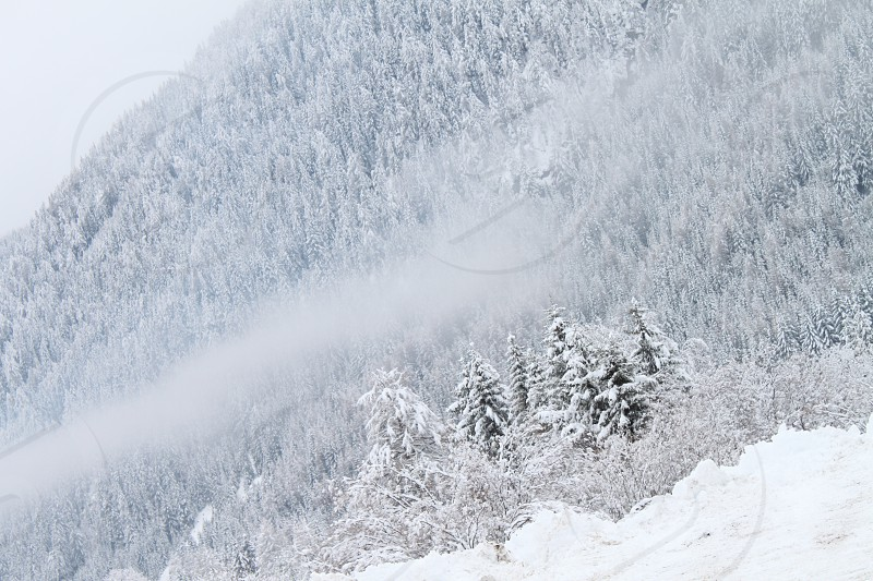 trees on mountain covered with snow photo