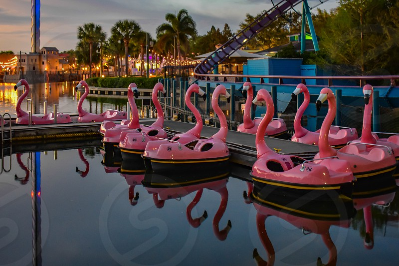 Orlando Florida. March 09 2019.  Panoramic view of Flamingo's paddle boat and Mako rollercoaster at Seaworld in International Drive area (3) photo