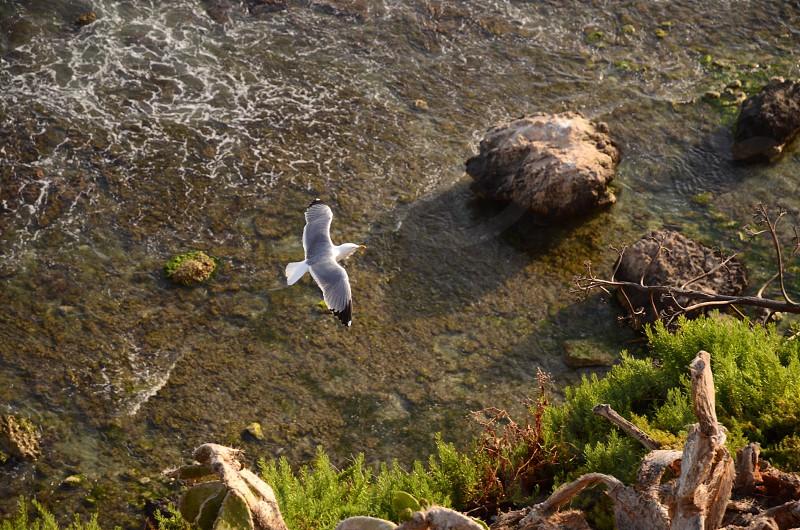 white and gray dove photo