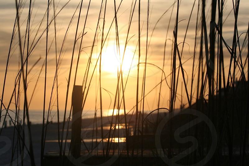 Sun setting at Rosemary Beach through the grass  photo