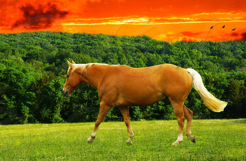 brown and beige horse walking on grass on sunet view photo
