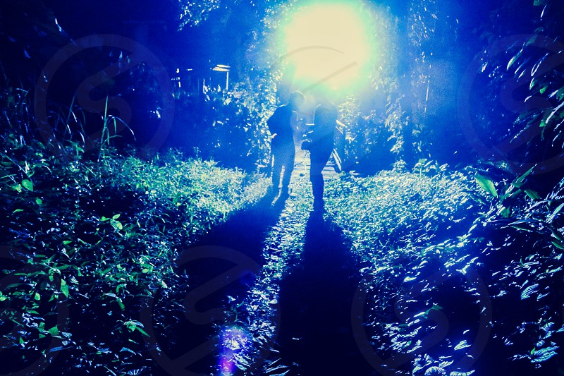Travelling in the forest at night photo