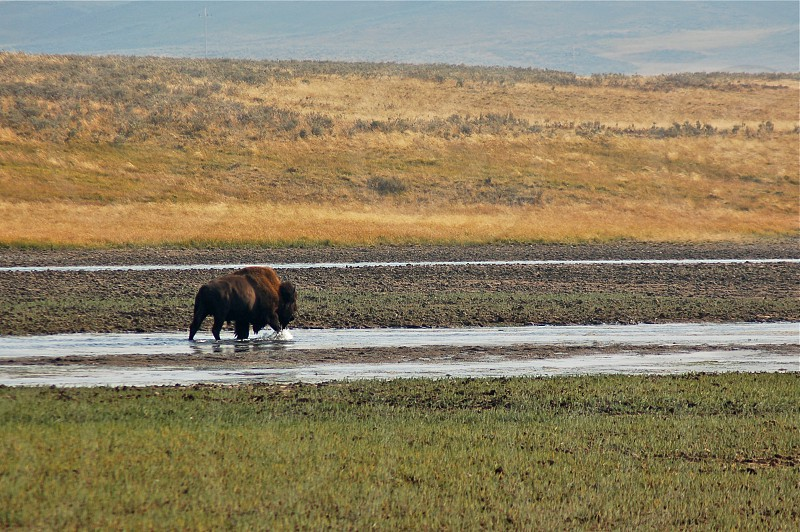 Yellowstone Stroll.  photo