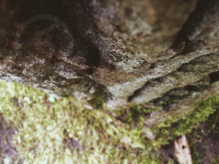 Woods adventure photo