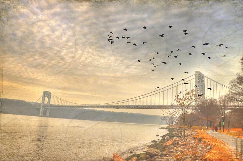 gray suspension bridge photo