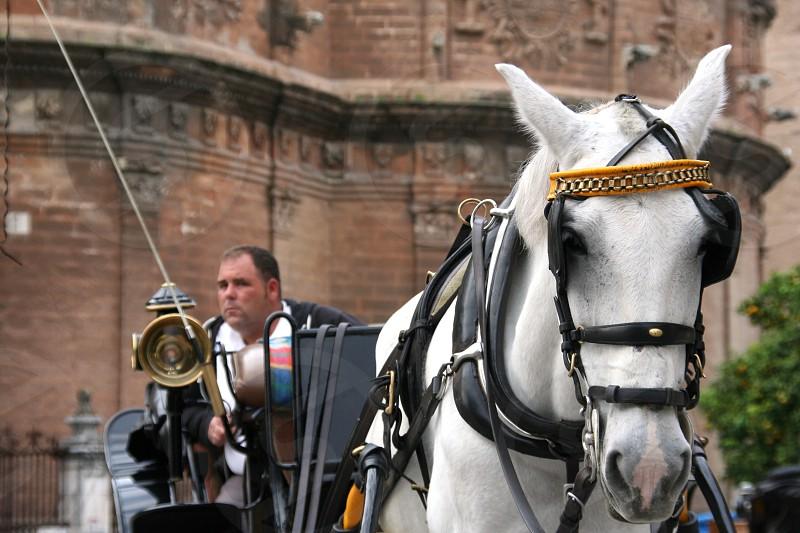 man riding on a white horse photo