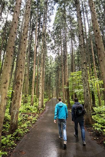 Woodland around Omoshiroyama area Japan. photo