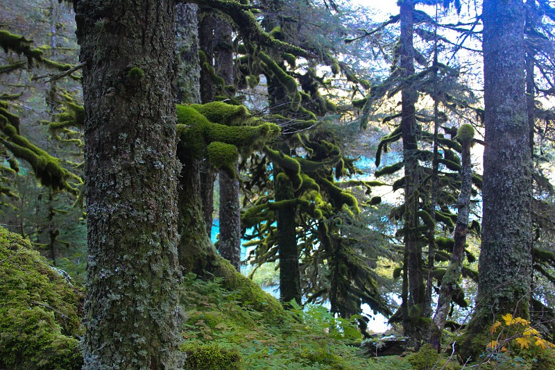 Moss Forest photo