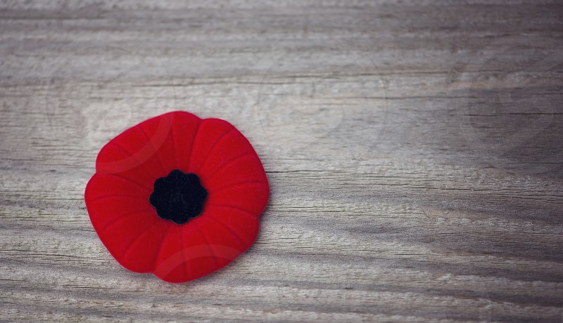 Close up of a Remembrance Day poppy. photo