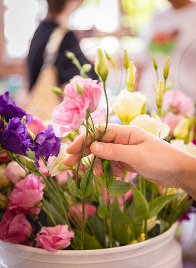 A woman picks out flowers.  photo